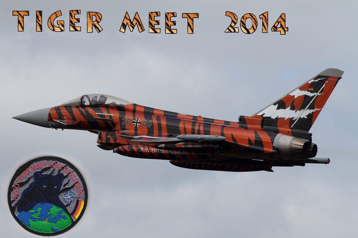 tiger meet 2014